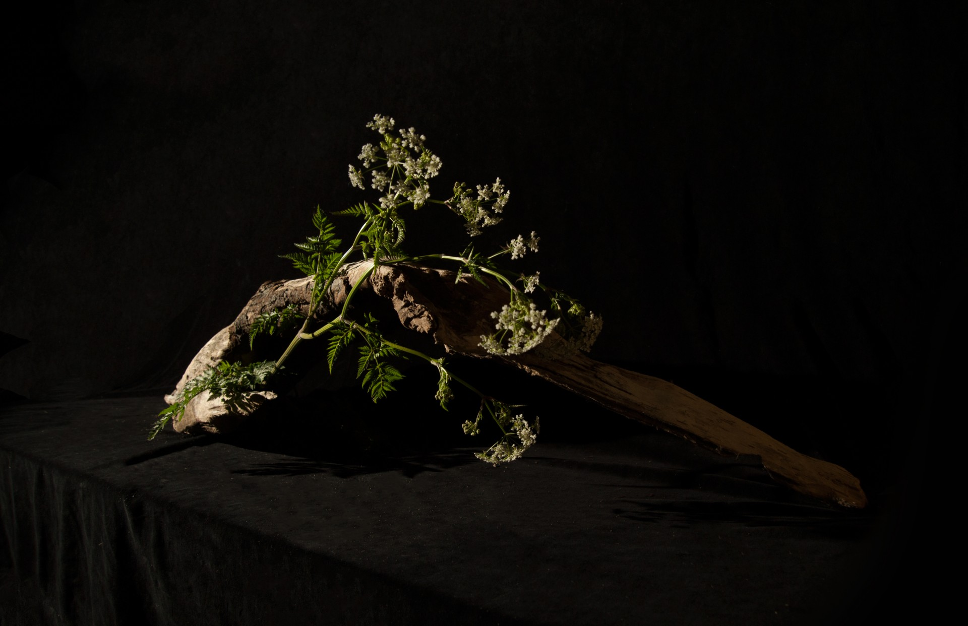 Jessica Minn Ikebana | Sculpture & Photography