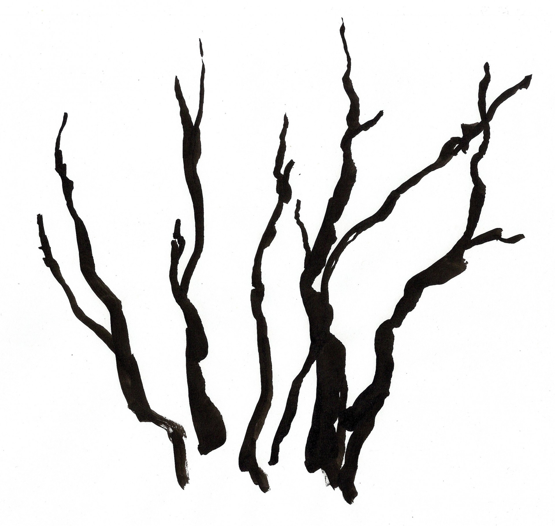Jessica Minn Tree skeletons | Illustration