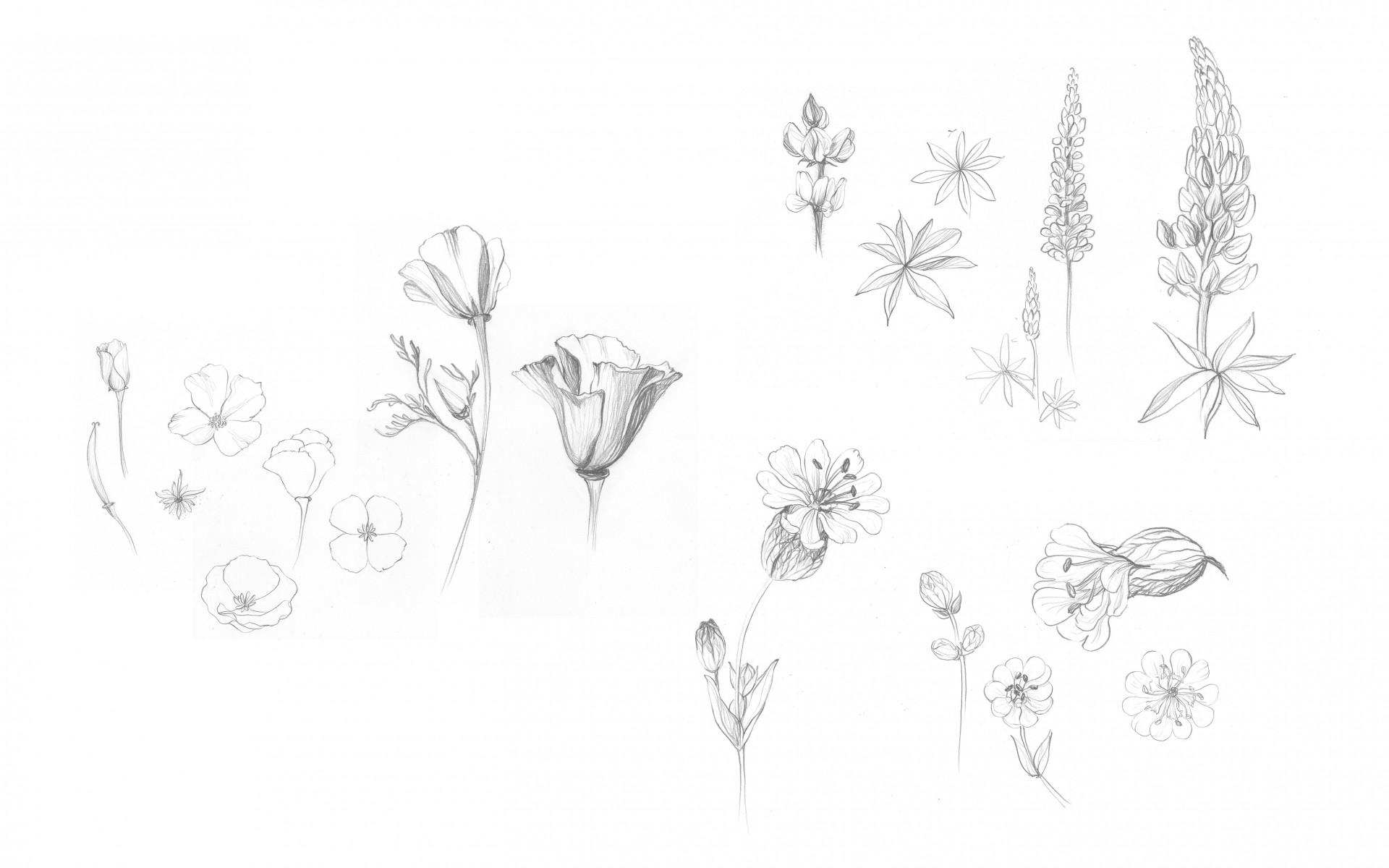 Jessica Minn Spring | Illustration